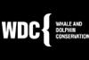 wdc-big